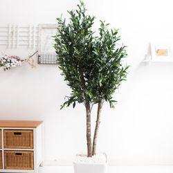 올리브나무 200cm 아크릴 5-5 [조화]