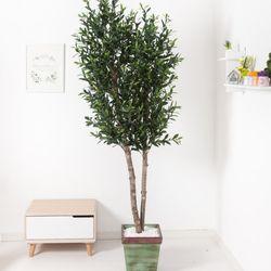 올리브나무 230cm 빈티지 5-5 [조화]