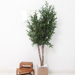 올리브나무 200cm 로프 5-5 [조화]