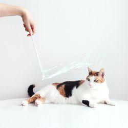 오로라 낚시대 강아지 고양이 장난감 카샤카샤 반짝이 방울