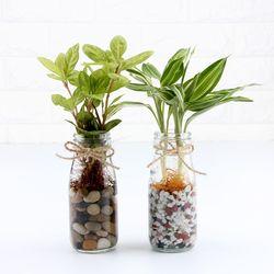 수경식물 스윙원형글라스