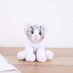 Shorthair cat - 숏헤어 고양이