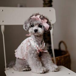 강아지옷 로즈코코로 핑크 슬리브리스(브로치1개포함)