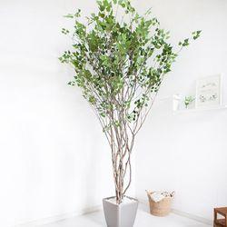 라인-자작나무 245cm(사방형) 메탈 5-7 [조화]