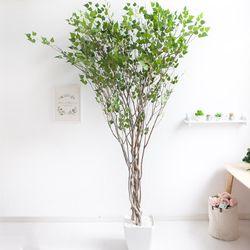 라인-자작나무 245cm(사방형) 아크릴 5-5 [조화]