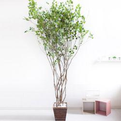 라인-자작나무 245cm(사방형) 우드 5-5 [조화]