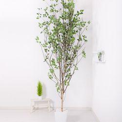 A자형자작나무320cm 아크릴5-5 [조화]