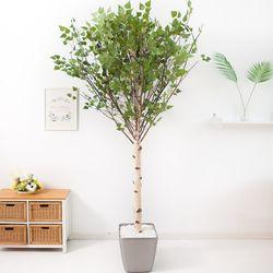 기본Y자형 자작나무 230cm(사방형) 메탈 5-7 [조화]