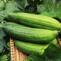 전남 장성 수세미 열매 3kg