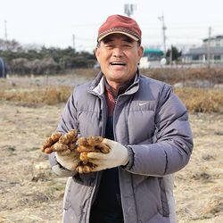봉동 생강(개량흙생강) 1kg