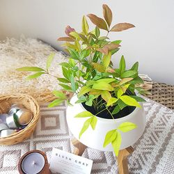 공기정화식물 남천 (화이트화분)