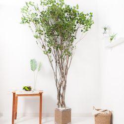 라인-자작나무 245cm(사방형) 로프 5-5 [조화]