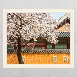 ck806-벚꽃필무렵창문그림액자