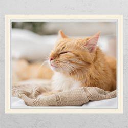 cg678-졸린고양이창문그림액자