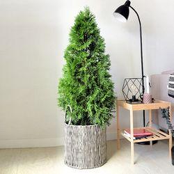에메랄드 그린 나무(라탄바구니추가)(서울퀵)