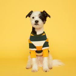 강아지옷 스트라이프 맨투맨-옐로우 그린