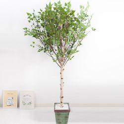 기본Y자형 자작나무 230cm(사방형) 빈티지 5-5 [조화]