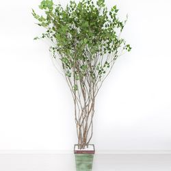 라인-자작나무 245cm(사방형) 빈티지 5-5 [조화]