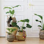 라탄바구니 & 공기정화식물 SET (M사이즈)