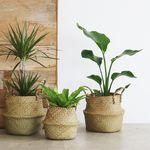 라탄바구니 & 공기정화식물 SET (L사이즈)