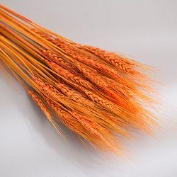 밀 묶음(오렌지)
