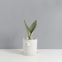 문샤인산세베리아2호 침실에 놓기 좋은식물