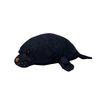 보들보들 바다동물 (바다표범)