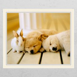 cg682-토끼와강아지창문그림액자