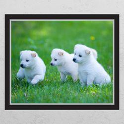 cg684-귀여운백구들창문그림액자