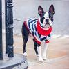 강아지니트 스웨터 캐시미어 튜나 루비루퍼스