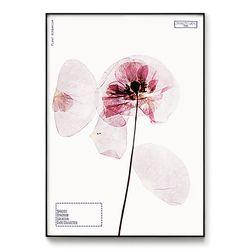 메탈 모던 식물 꽃 인테리어 포스터 액자 양귀비 [대형]