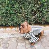 강아지 러플 스트라이프 티셔츠(블랙)