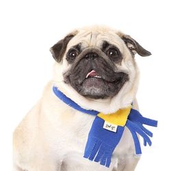 강아지옷 폴라폴리스 목도리
