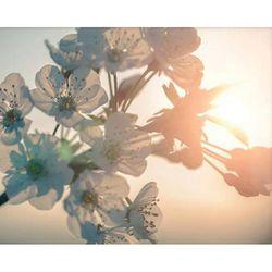 BLOSSOM - Sun 포스터액자 프레임 미포함