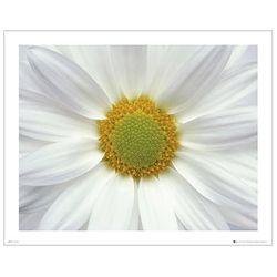 FLOWER -Diasy 포스터액자 프레임 미포함