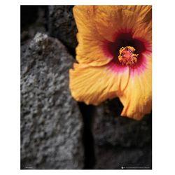 FLOWER-stone wall 포스터액자 프레임 미포함