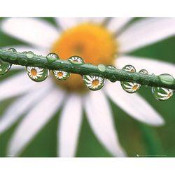 DAISY-dew 포스터액자 프레임 미포함