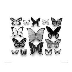 Collection de Papillons 포스터액자 프레임 미포함