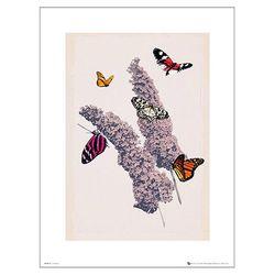 나비와 꽃 40x50 포스터액자 프레임 미포함