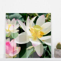 ce052-아크릴액자풍요인테리어연꽃