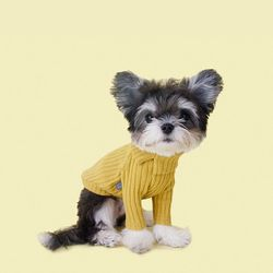 Cozy Turtleneck T-Shirt 코지 터틀넥 티셔츠 Mustard