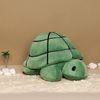 Turtle M (Bruna Family)