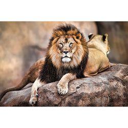 PP34092 사자의 왕 (91x 61)