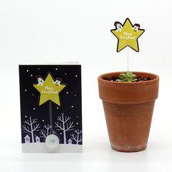 크리스마스 씨앗카드 별