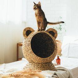 미어캣 곰돌이안에 고양이 집