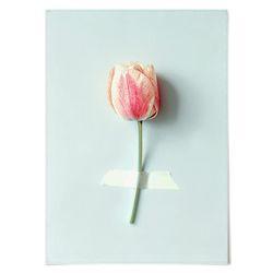 중형 패브릭 포스터 F185 식물 꽃 인테리어 액자 튤립 한 송이