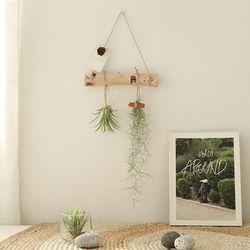 공기정화식물 - 틸란드시아 행잉플랜드set (미니)