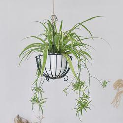 접란 행잉플랜트 바스켓 세트 식물