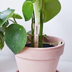 공기정화 식물 화분 물주기 테스트 막대 5개