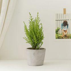 [plant] 싱그러운 율마 식물화분set